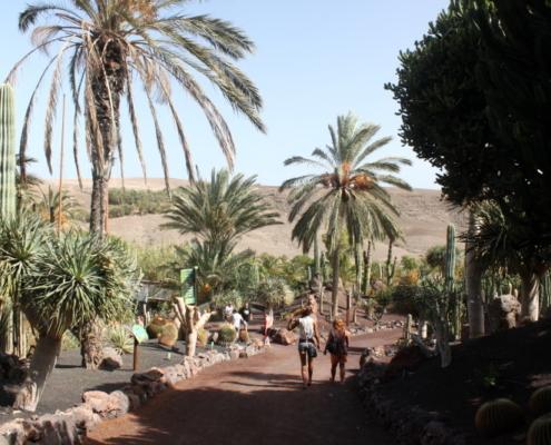oasis par fuerteventura